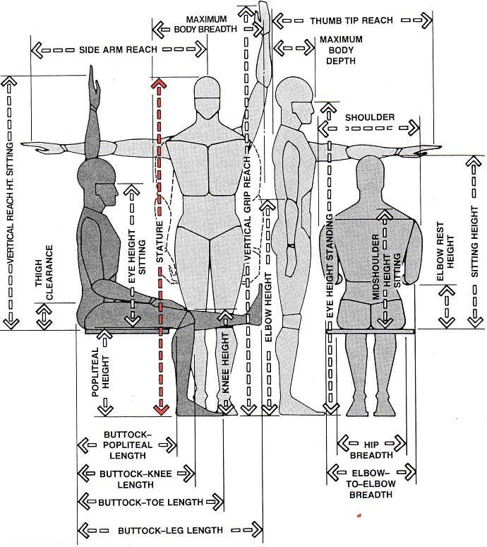 anthropometrics - Qpractice NCIDQ Glossary