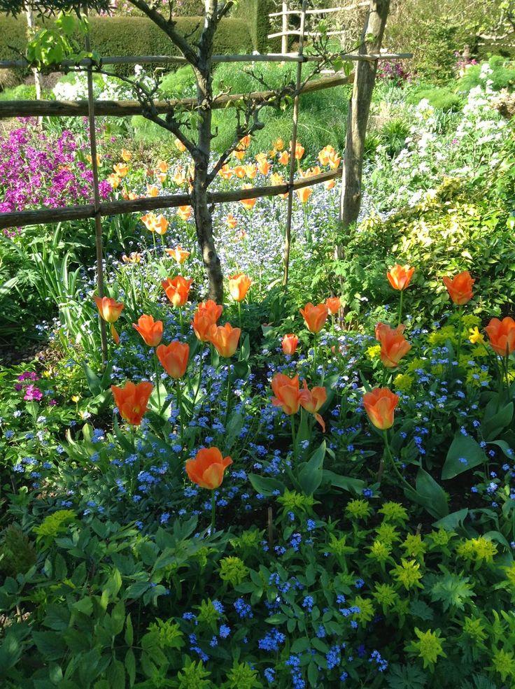 Tulipa, Euphorbia and Myosotis in the Orchard Garden, Great Dixter - Photo by Noemi Mercurelli