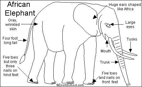 African Elephant Printout- EnchantedLearning.com
