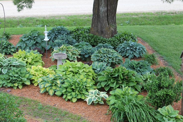 25 Planting Around Tree Landscape Pictures And Ideas On Pro Landscape