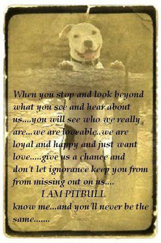 I am a Pit Bull