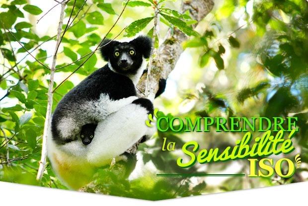 Blog Tonton Photo • L'exposition (3/3) : Comprendre la sensibilité ISO en moins de 3 minutes !