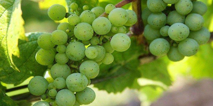 vinjournalen.se -  Vin Tips : Lär känna friska, fruktiga Vinho Verde |  Även om lightviner ökat enormt i popularitet, så har Systembolaget ännu ett ganska litet urval i det ordinarie sortimentet. Viner med sådär en 9-11% alkoholhalt frånportugisiska regionen Vinho Verde kommer säkert på en odelad första plats om man vill ha ett ypperligt friskt och fruktigt vin. Vin... http://wp.me/p73gTR-3he