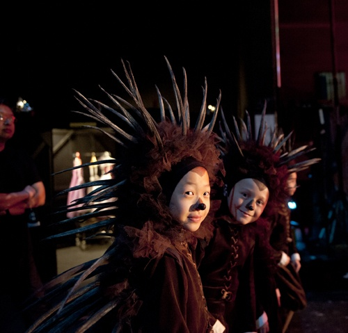 The adorable hedgehogs backstage at Alice's Adventures in Wonderland. Photo by Sian Richards.