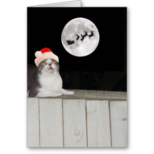 Funny Cat Sees Santa Greeting Card