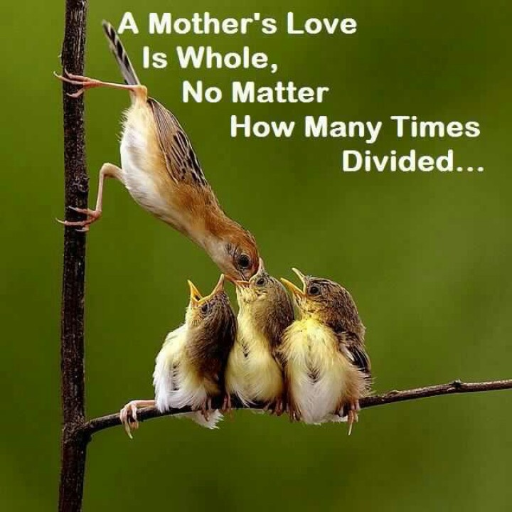 A mothers love is whole...   Need a giant sized print out of this in my house for those days when someone is feeling needier than usual