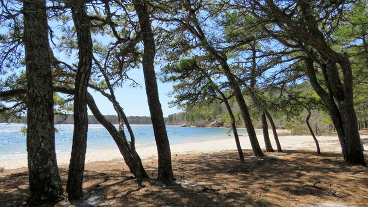 The amazing Cliff Pond Trail - Cape Cod Online