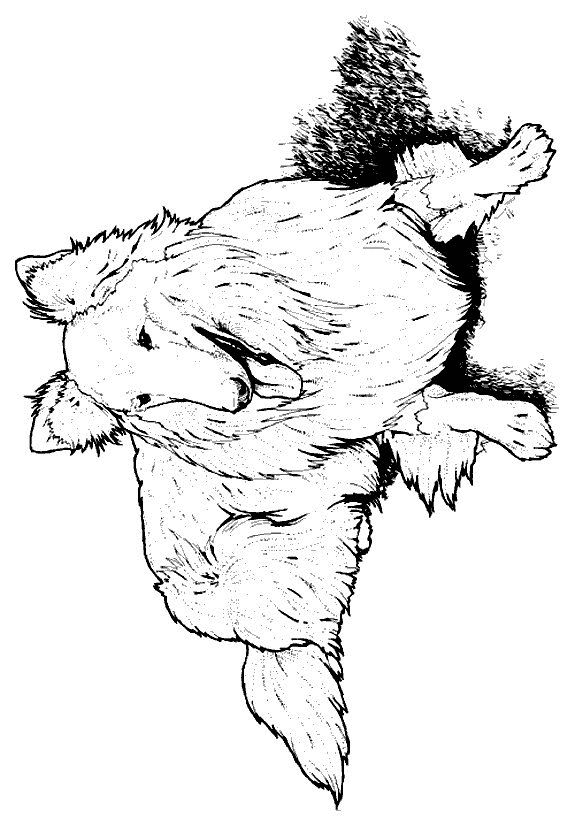 lassie malvorlagen  coloring and malvorlagan