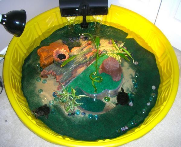 indoor turtle pond.