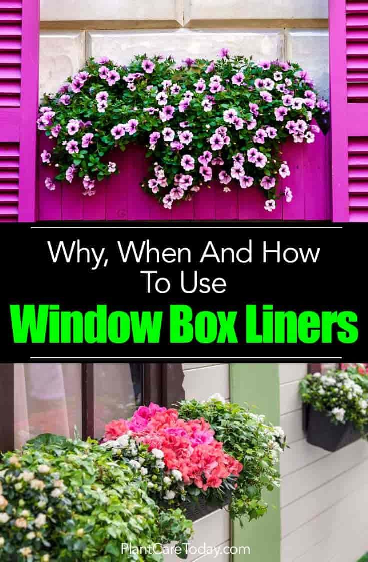 Window Box Liners Why When How To Use Flower Box Inserts Window Box Flowers Flower Boxes Window Box