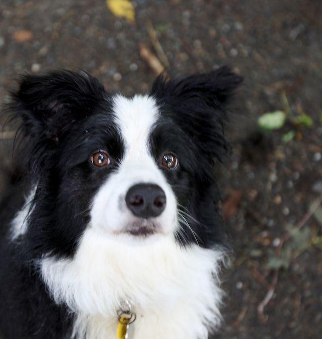 Die Besten 17 Bilder Zu Border Collie Auf Pinterest | Hundebetten ... Bordre Bad Bilder