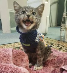 Kitten Found Hobbling on Street Meowing for Help - They Knew They Had to Save Him..