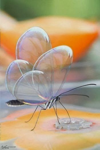 Translucent Butterfly - Is this realy, realy real???