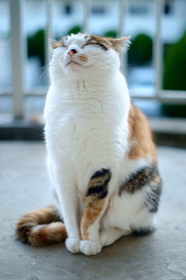 Contented Kitty お行儀の良いぬこ
