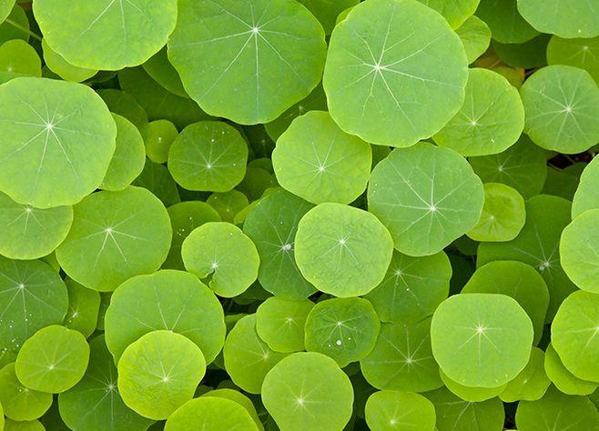 绿色荷叶背景高清图片