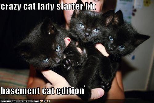 crazy cat lady starter kit  basement cat edition