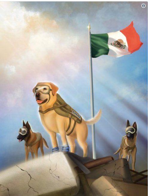 Frida, perra de rescate de la Secretaria de Marina, México