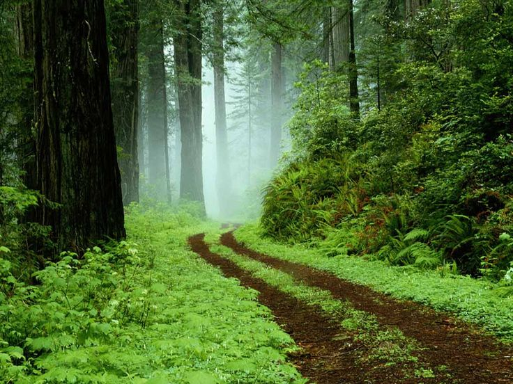 Road on the Jungle