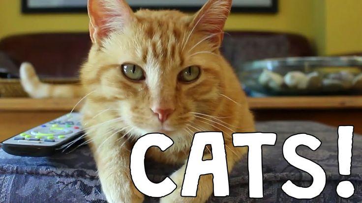Best Cat Video Compilation - The Friskies Awards 2014  https://www.youtube.com/watch?v=kdcKlK6Cmm8