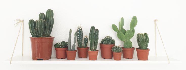 Helt klart vores favorit kaktusser! SHOP online! Er du også vild med den grønne plante trend? - Få inspiration til hvordan du passer godt på din kaktus www.creadecor.dk/kaktusser-din-kaktus-tips-tricks/