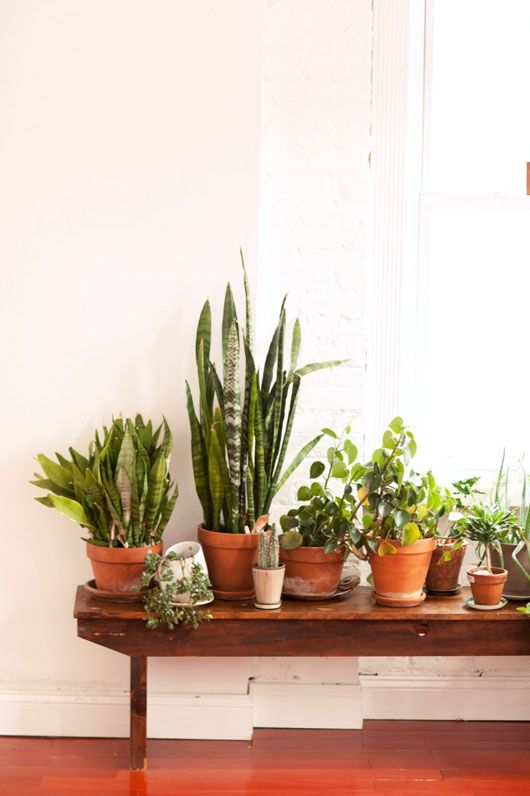 Plants on a short shelf- for in front of the living room window!