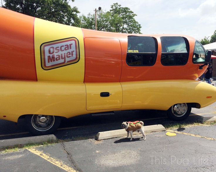 Pug and the Oscar Mayer Wiener Mobile! I was actually inside one of these,, it was very disappointing.