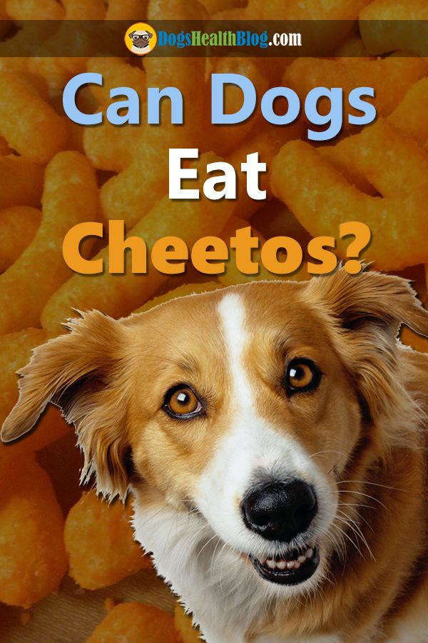 Can Dogs Eat Cheetos Are Cheetos Bad For Dogs Can Dogs Eat