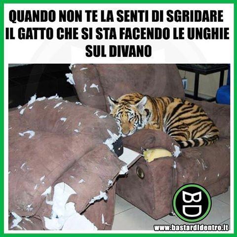 Tagga i tuoi amici e #condividi #bastardidentro #gatto #tigre www.bastardidentro.it