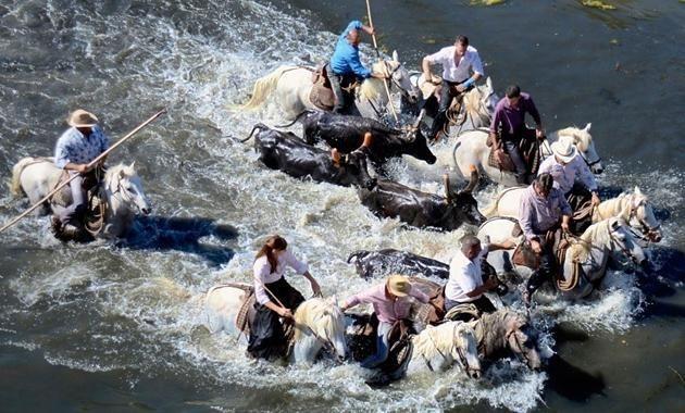 Echte Cowboys in der Camargue
