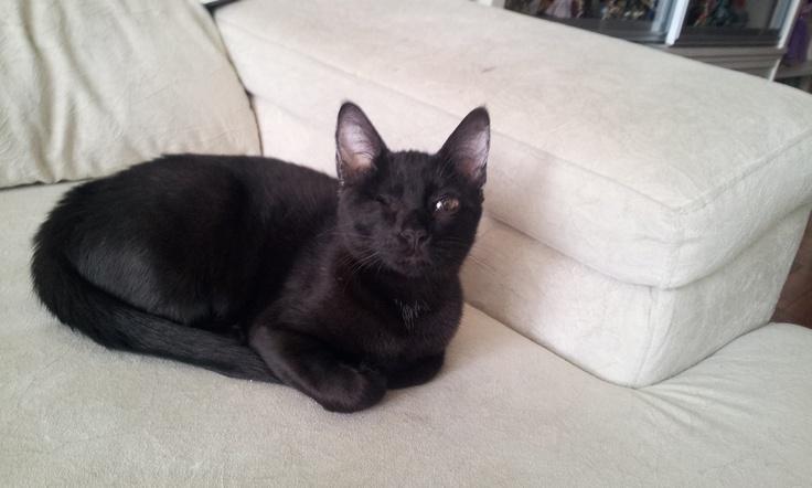 Gatinha especial para adoção - não tem um olhinho mas leva vida normal - adotargatinhos@gmail.com