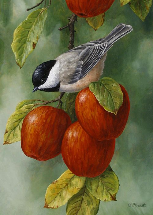 Un ave sobre unas manzanas en su manzano...