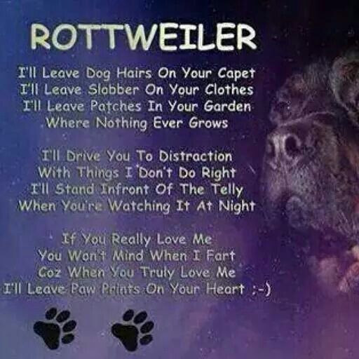 Rottweiler...