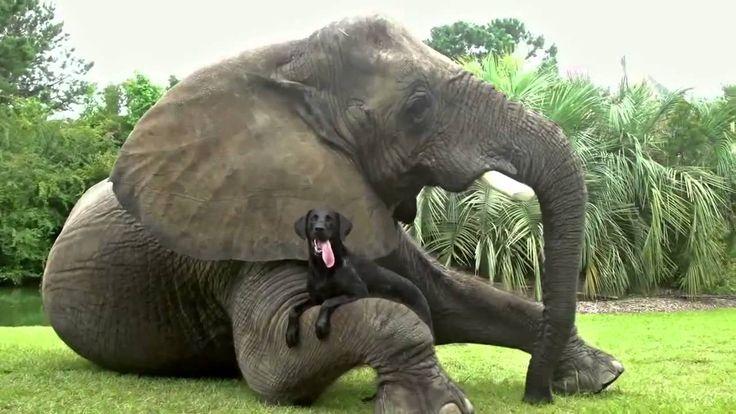 Невероятная дружба между животными. В мире животных