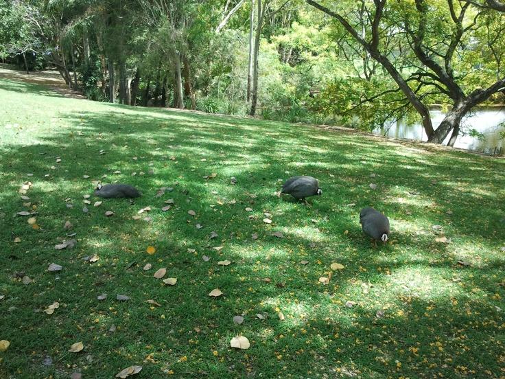 Wildlife in UQ Lake
