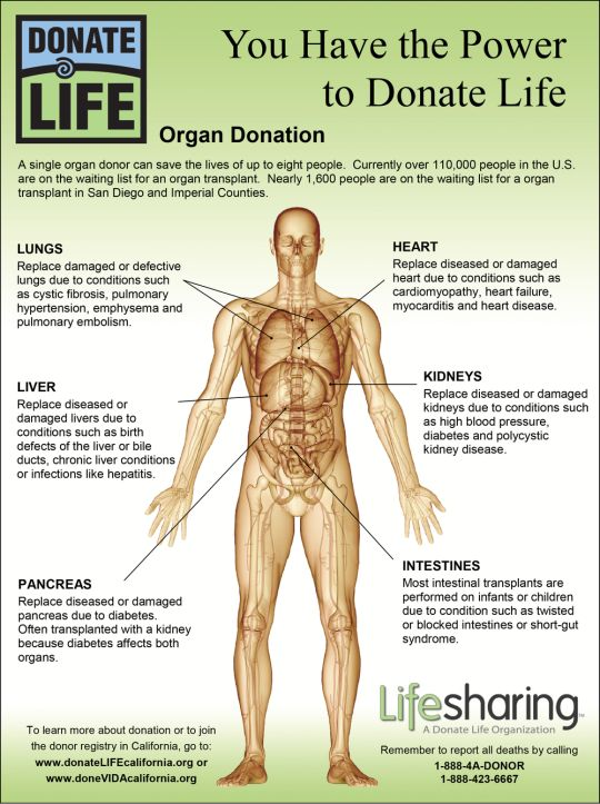 Happy Organ Donation Day – August 13 You Have the to – Day