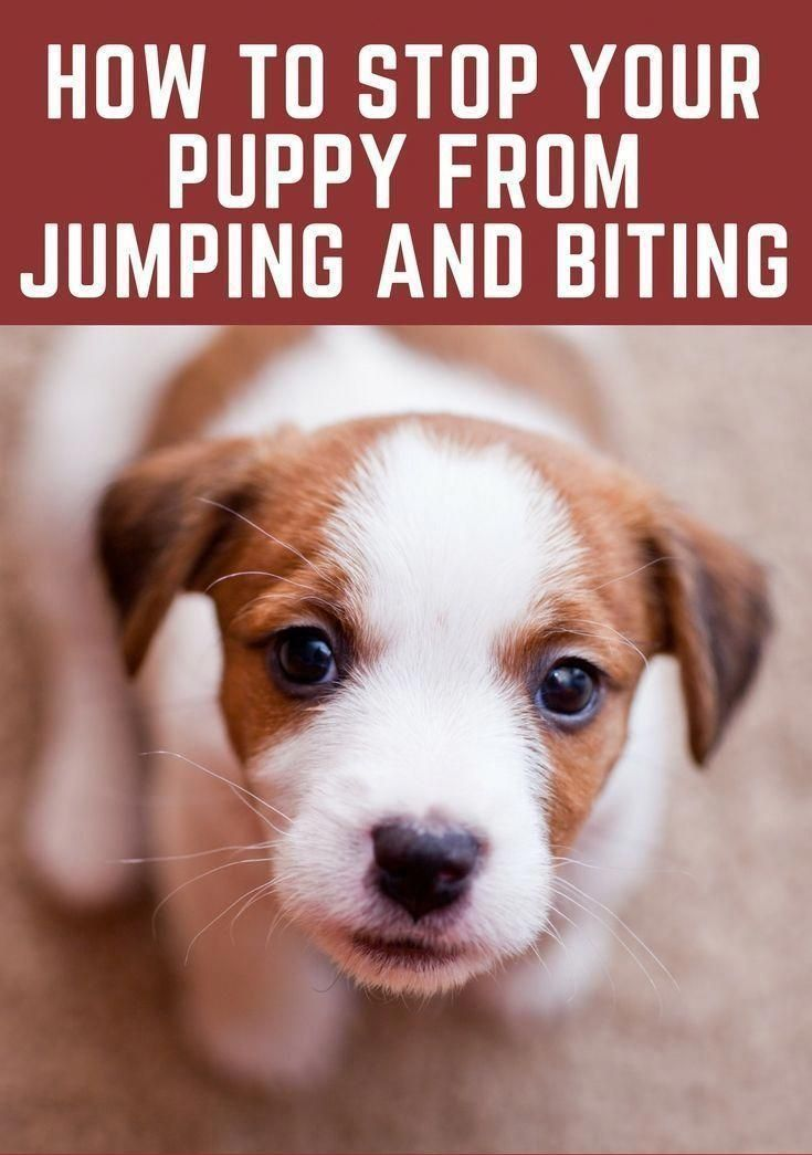 When It Comes To Puppy Training Biting And Nipping Can Be Cute