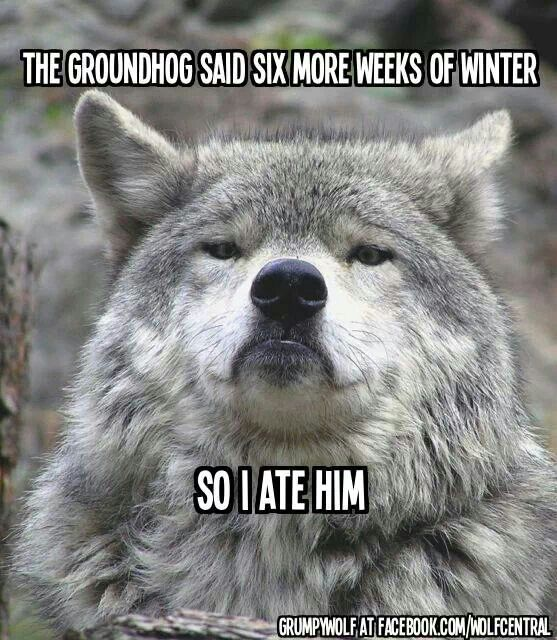 frye shoes groundhog day meme i lied memes