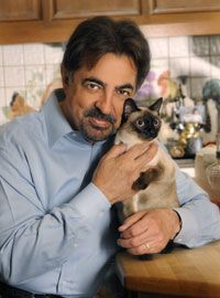 """Joe Mantegna at home with his Siamese cat Juliet. Photo by Chris Amerouso."" -- From ""Cat Fancy Magazine,"" where they also made the cover (I believe in September 2009)."