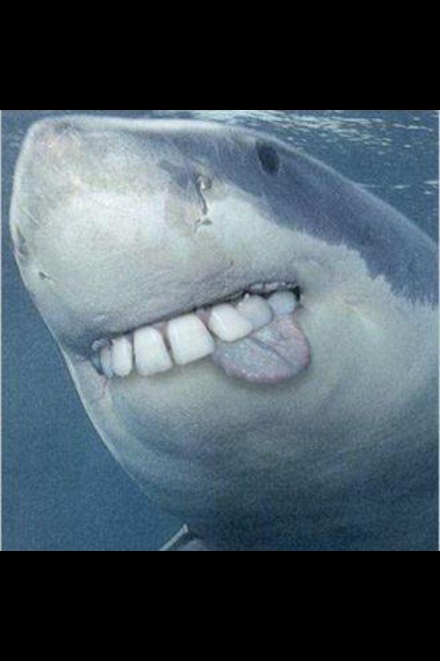 Funny shark   Ocean creatures   Sharks with human teeth ...