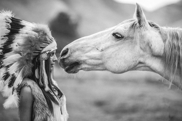 Schöne Pferde Bilder, die die Großartigkeit der Pferde zeigen!