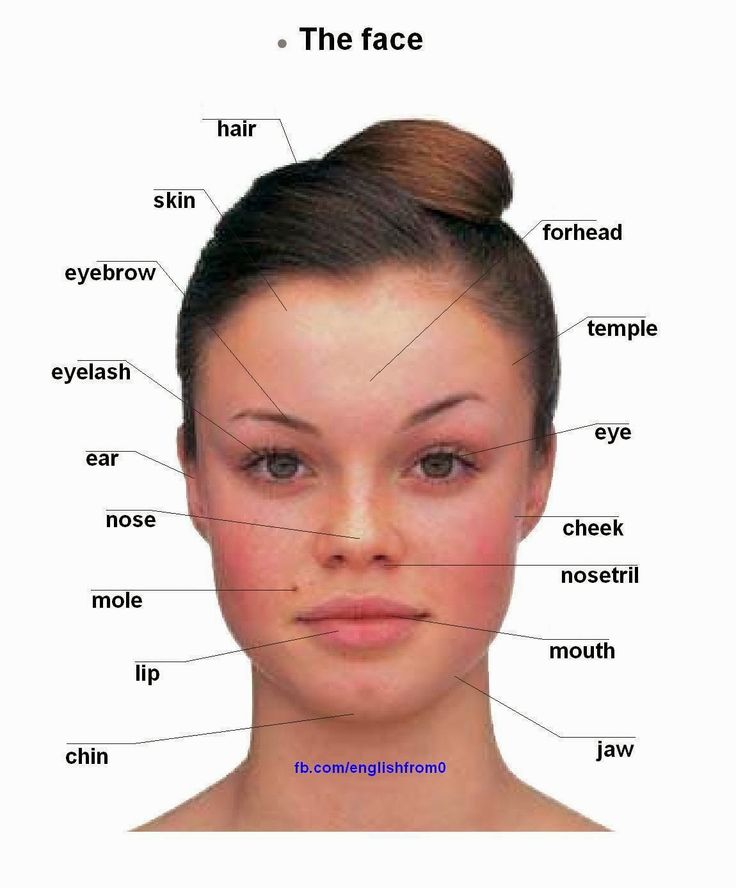 English for beginners: The face | human body | Pinterest | English ...