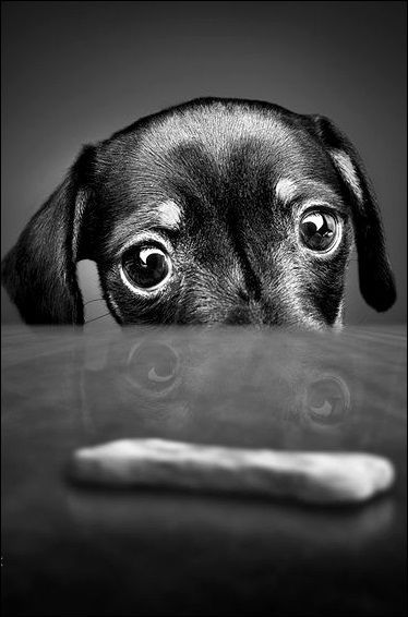 Eyeing the treat...