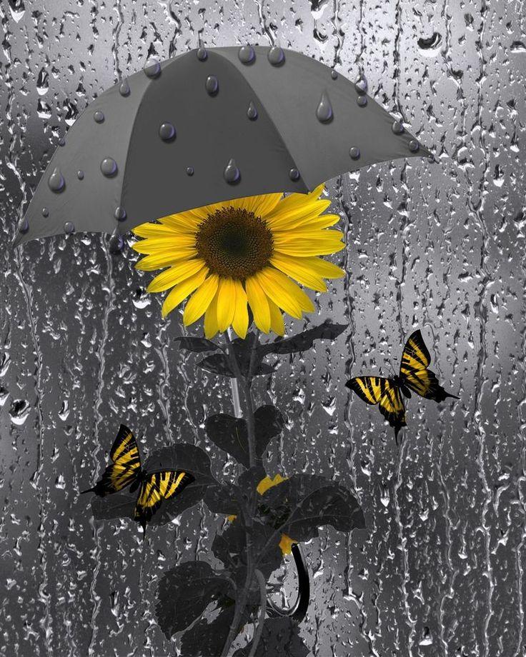 Yellow Gray Wall Art SunflowerButterfliesBathroom