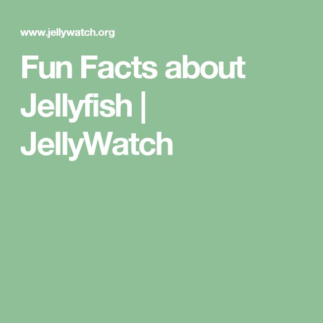 Fun Facts about Jellyfish | JellyWatch