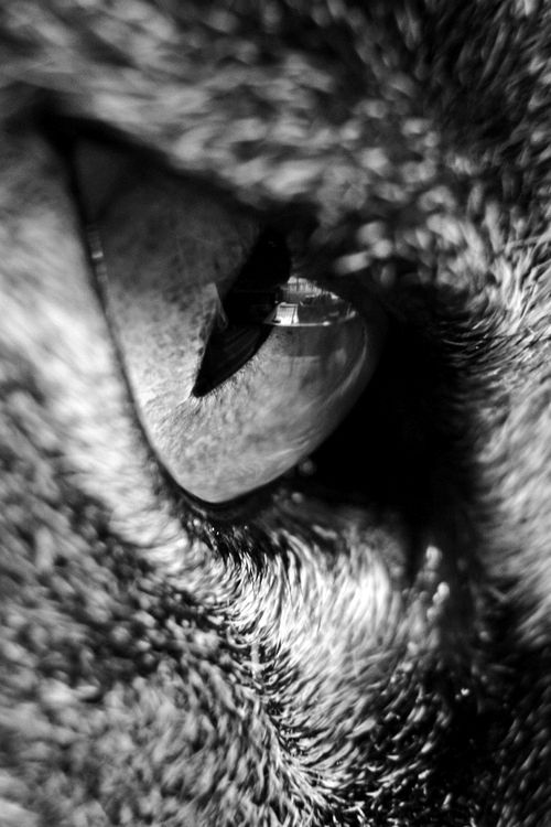 animal eye black and white - photo #10