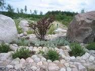 Kuvahaun tulos haulle kivikkopuutarha