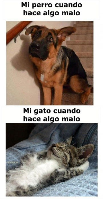 The difference between dogs and cats. Fun image to discuss with kids learning Spanish.