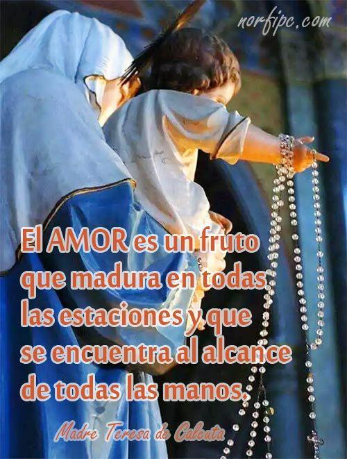 El amor es un fruto que madura en todas las estaciones y que se encuentra al alcance de todas las manos. Madre Teresa de Calcuta