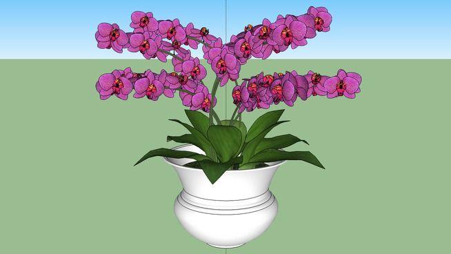 Vaso com Orquídeas - 3D Warehouse