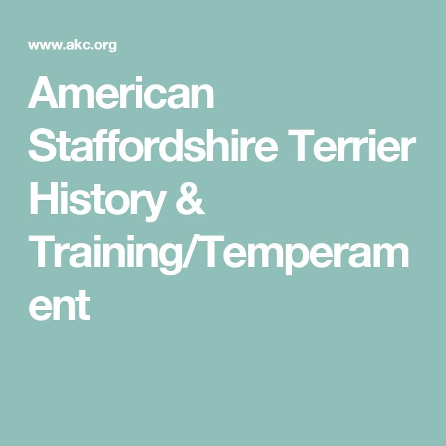 American Staffordshire Terrier History & Training/Temperament